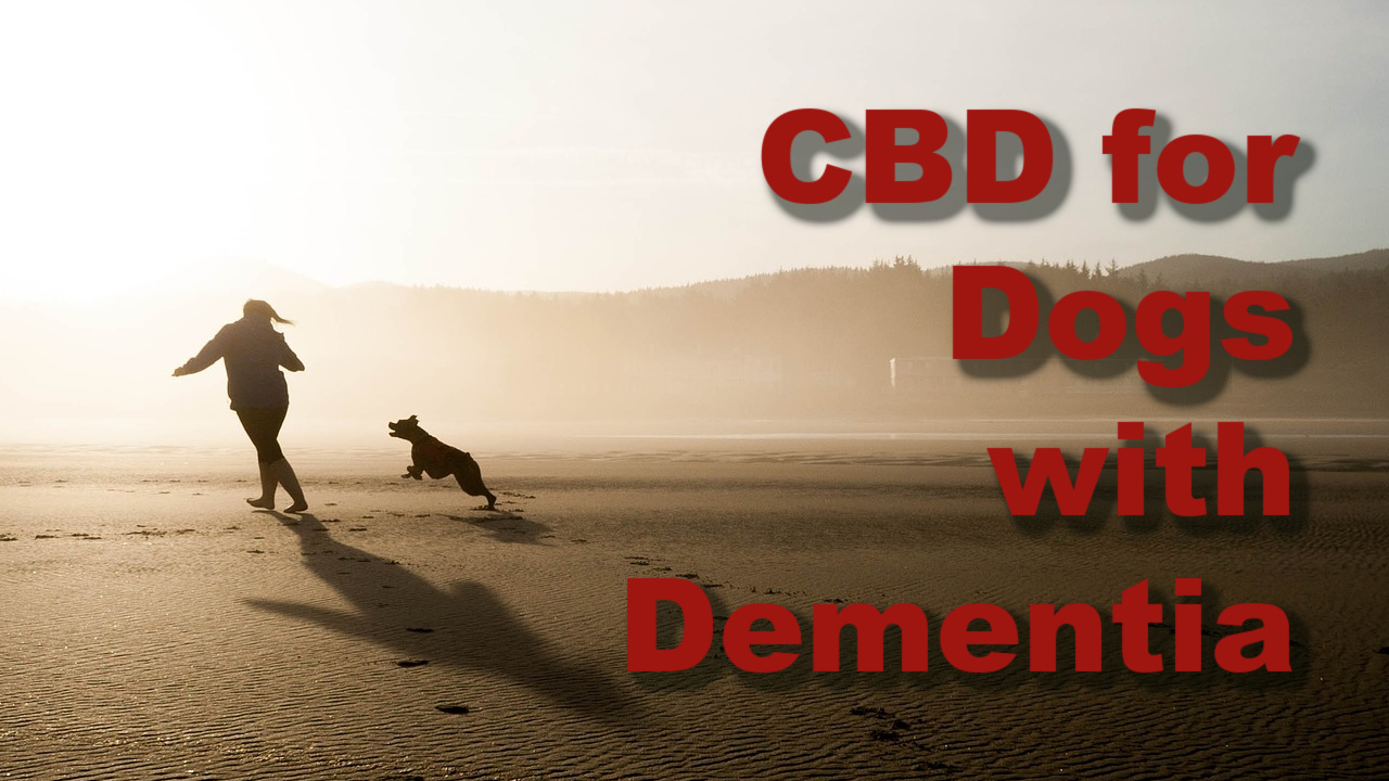 Does CBD Help Dogs with Dementia